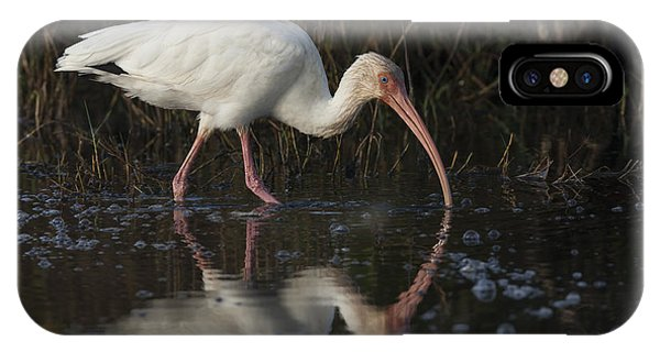 White Ibis Feeding In Morning Light IPhone Case