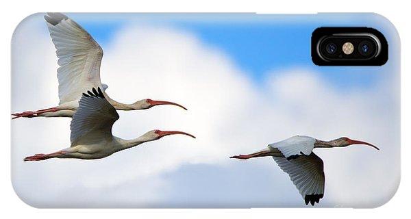 Ibis iPhone Case - White Ibis Flock by Mike Dawson