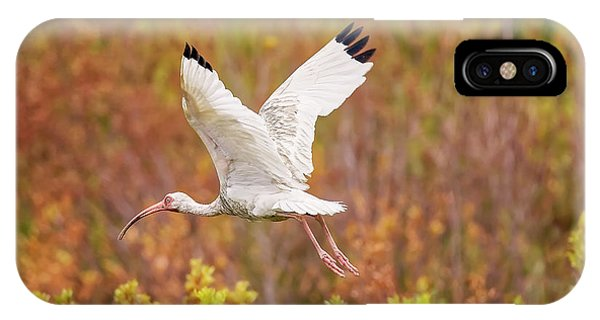 White Ibis In Hilton Head Island IPhone Case