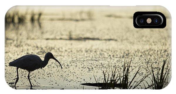Ibis iPhone Case - White Ibis Morning Hunt by Dustin K Ryan