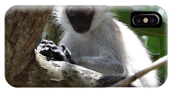 Exploramum iPhone Case - White Monkey In A Tree 4 by Exploramum Exploramum