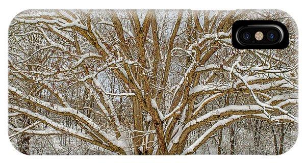 White Oak In Snow IPhone Case