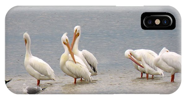 White Pelicans And Friends IPhone Case