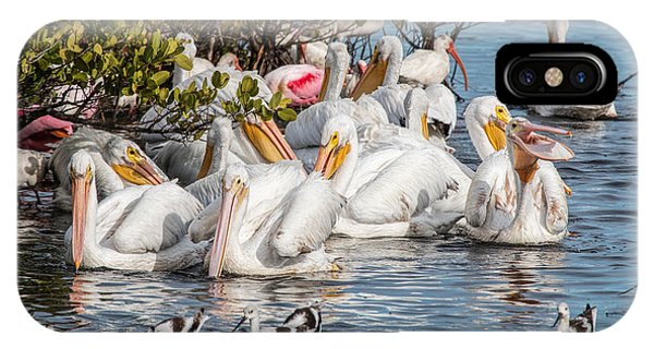 White Pelicans And Others IPhone Case