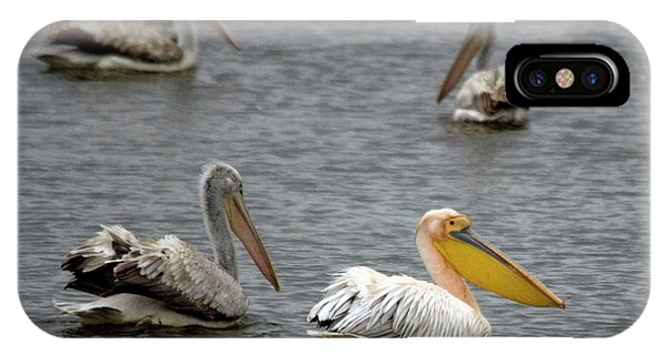White Pelicans On Lake  IPhone Case