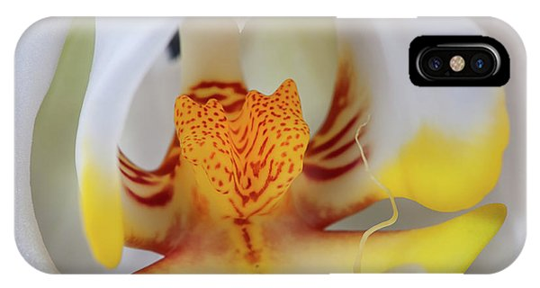 White Phalaenopsis Orchid 2 IPhone Case