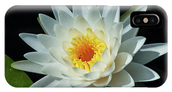 White Pond Lily IPhone Case