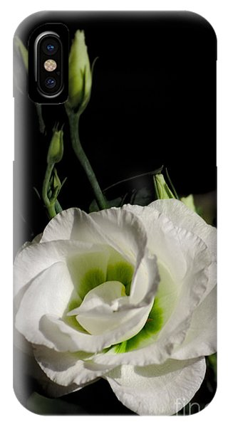 IPhone Case featuring the photograph White Rose On Black by Jeremy Hayden