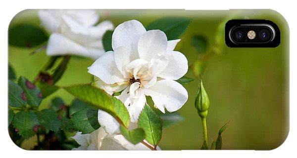 White Roses IPhone Case