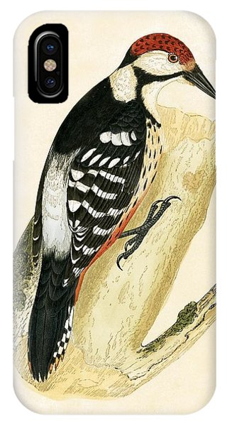 White Rumped Woodpecker IPhone Case