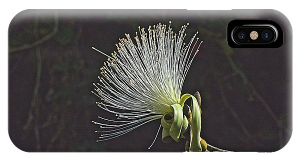 White Shaving Brush Pseudobombax Flower IPhone Case
