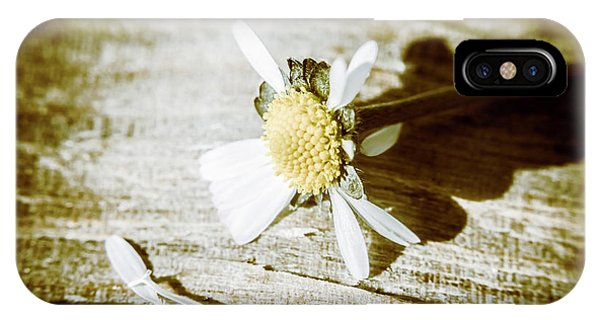 Close-up iPhone Case - White Summer Daisy Denuded Of Its Petals by Jorgo Photography - Wall Art Gallery
