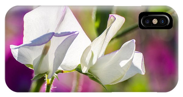 White Sweet Pea 3344 IPhone Case