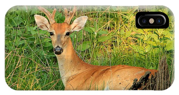 White-tail Buck Resting IPhone Case