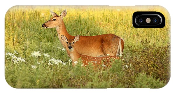 White-tail Doe And Fawn In Meadow IPhone Case