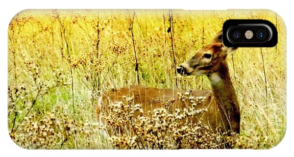 White Tail Doe On Alert IPhone Case