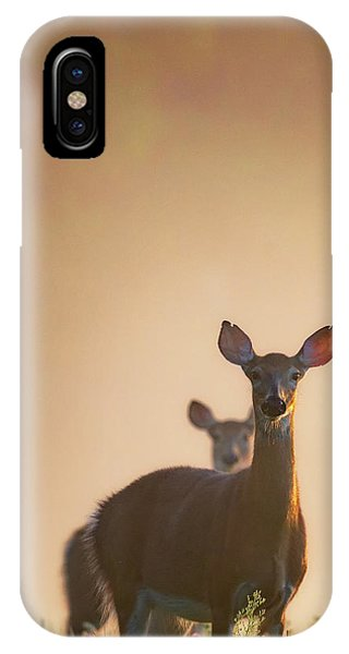 White Tailed Deer iPhone Case - White-tailed Deer 2016 by Bill Wakeley