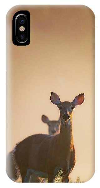 Sunrise iPhone Case - White-tailed Deer 2016 by Bill Wakeley