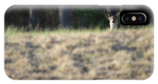 White Tailed Deer Calverton New York IPhone Case