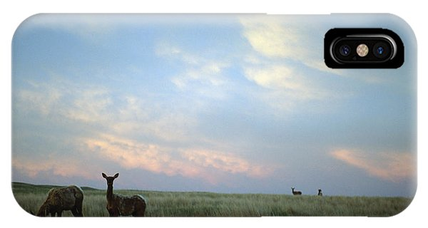 White-tailed Deer On The Prairie IPhone Case