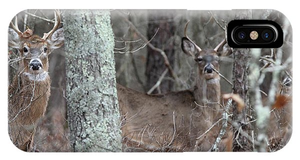 White Tailed Deer Smithtown New York IPhone Case
