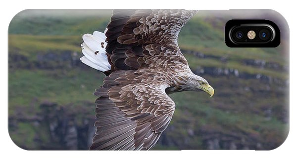 White-tailed Eagle Banks IPhone Case