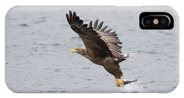 White-tailed Eagle Catching Dinner IPhone Case
