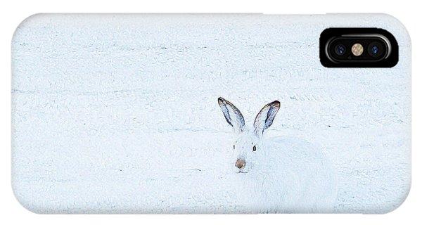White-tailed Jack Rabbit  IPhone Case