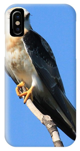 White-tailed Kite IPhone Case