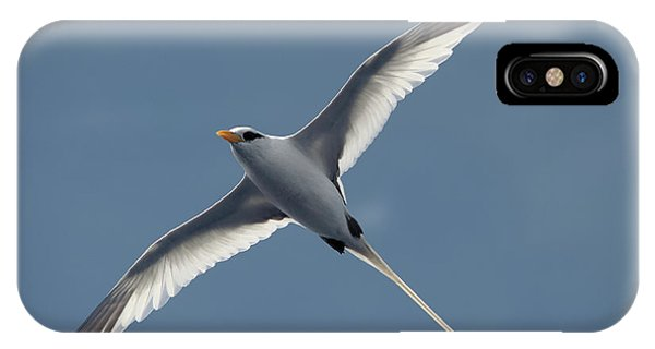 White-tailed Tropicbird IPhone Case