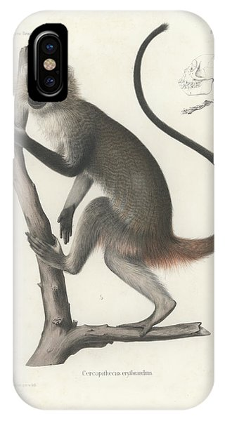 IPhone Case featuring the drawing White Throated Guenon, Cercopithecus Albogularis Erythrarchus by J D L Franz Wagner