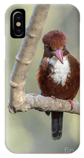 White-throated Kingfisher 01 IPhone Case