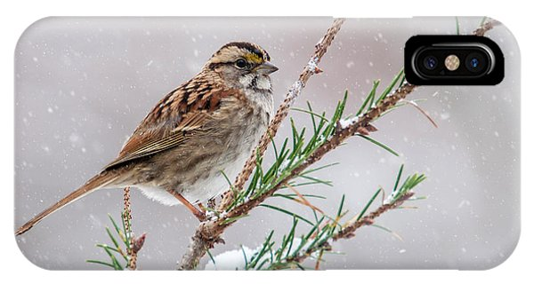 White Throated Sparrow IPhone Case