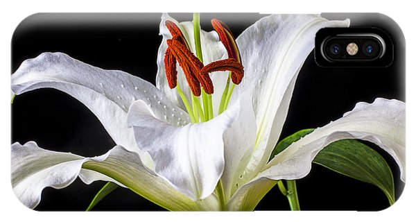 Lily iPhone Case - White Tiger Lily Still Life by Garry Gay
