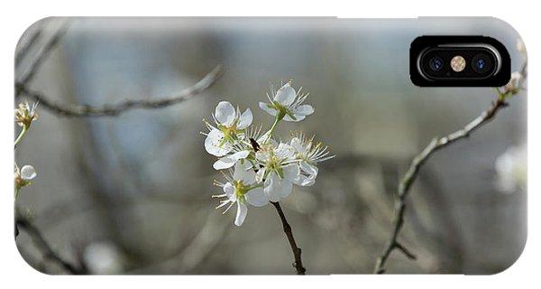 White Tree Bud IPhone Case