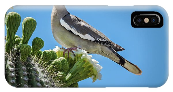 IPhone Case featuring the photograph White Winged Dove On Cactus Flower by Penny Lisowski