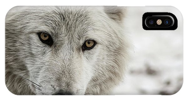 White Wolf II IPhone Case