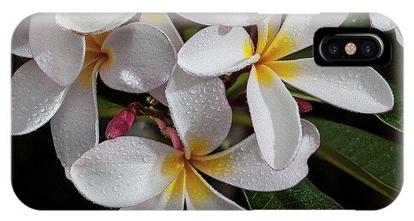 White/yellow Plumerias In Bloom IPhone Case