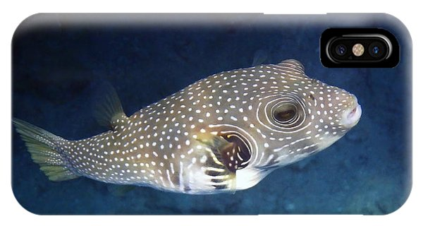 Whitespotted Pufferfish Closeup IPhone Case