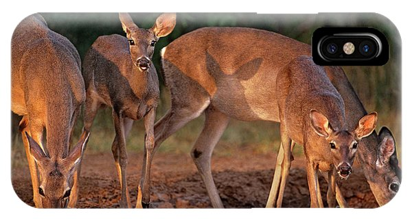 IPhone Case featuring the photograph Whitetail Deer At Waterhole Texas by Dave Welling
