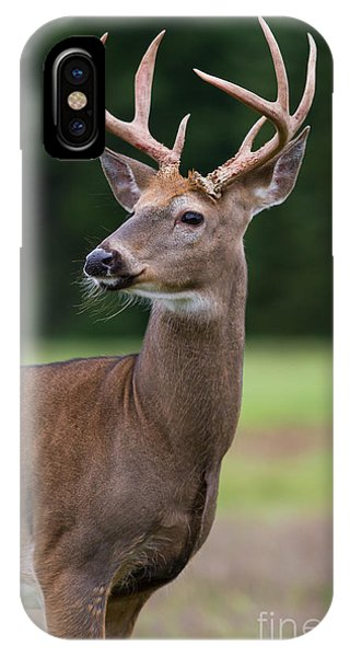 Whitetail Deer Buck IPhone Case