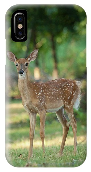 Whitetail Deer Fawn Phone Case by Erin Cadigan