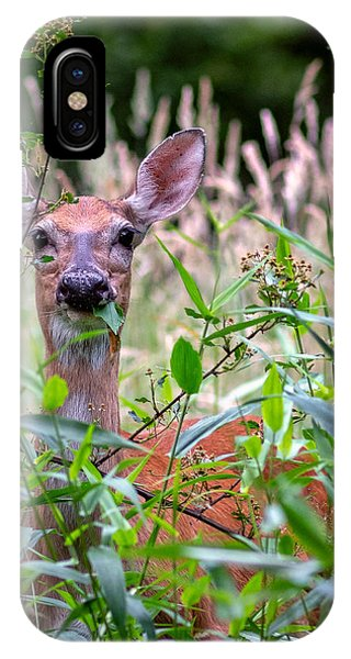 Whitetail Doe IPhone Case