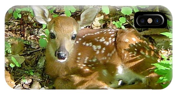 Whitetail Fawn II IPhone Case