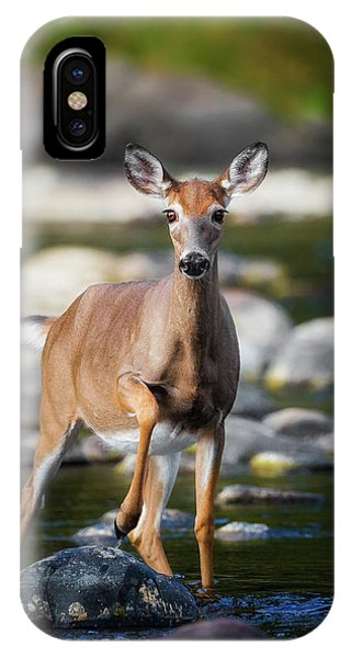 White Tailed Deer iPhone Case - Who Goes There by Bill Wakeley