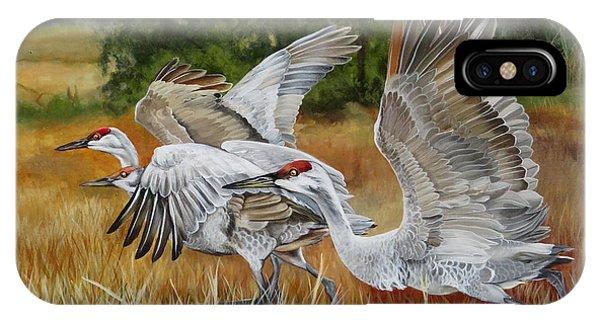 Sandhill Cranes In A Field IPhone Case