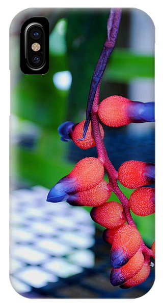 Wild About Bromeliads2 IPhone Case