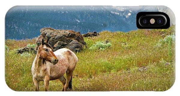 Wild Appaloosa Horse IPhone Case
