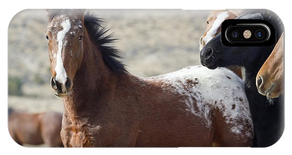 Wild Appaloosa Mustang Horse IPhone Case