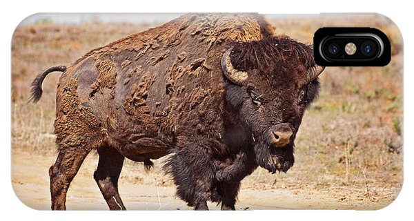 Wild Bison IPhone Case
